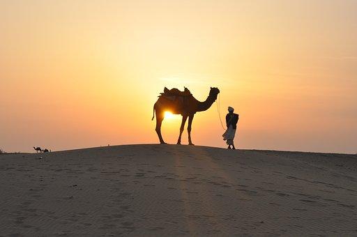 Desert, Sunset, Camel, Sand