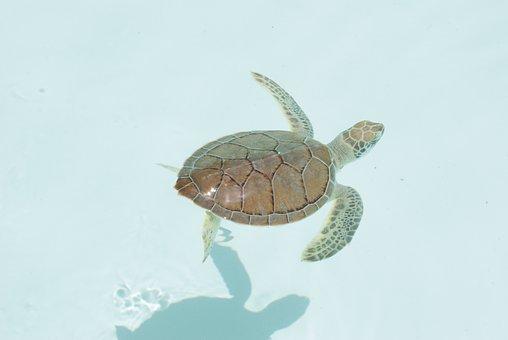 Turtle, Xcaret, Caribbean