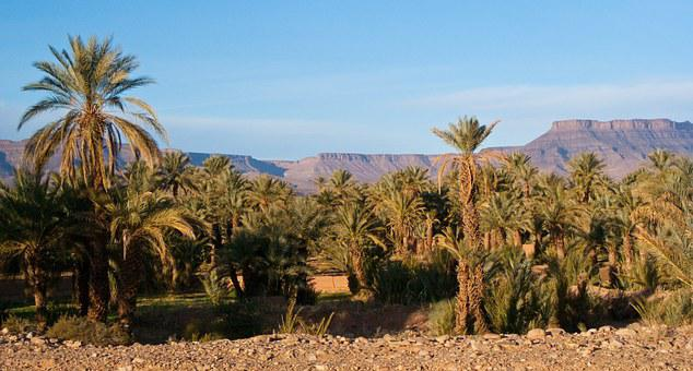 Desert, Palms, Morocco, Marroc, Landscape, Tree, Nature