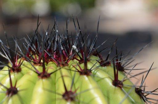 Sahuaro, Desert, Thorns