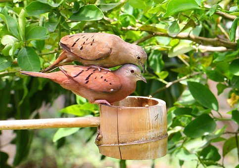Love Dove, Doves, Bird, Birds, Nature, Outside, Feeder