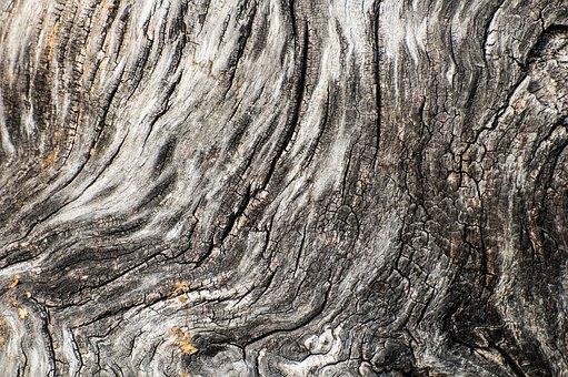 Tree Bark, Wood Texture, Background, Grey, Drab