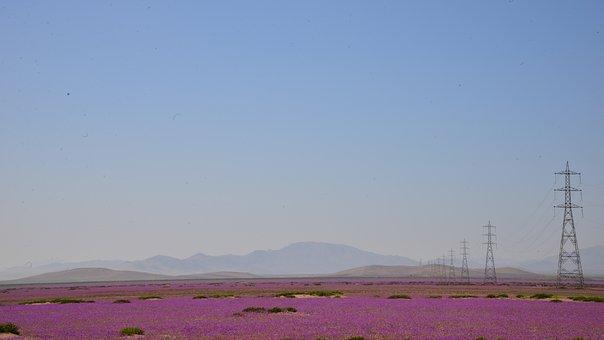 Flowering Desert, Sky, Electrical Towers, Flowers