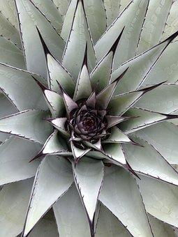 Cactus, Green, Succulent, Nature, Plant, Outdoor