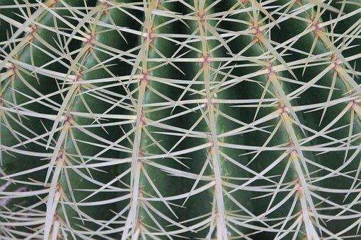 Cactus, Thorns, Plant, Desert, Garden, Succulent