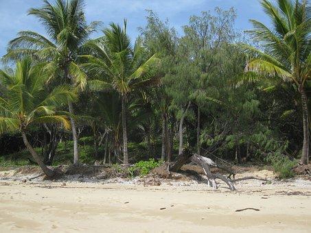 Island, Beach, Palm, Sand, Port Douglas, Vacation