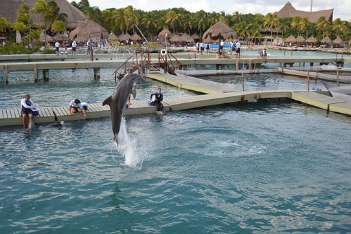 Dolphin, Water, Jump, Xcaret
