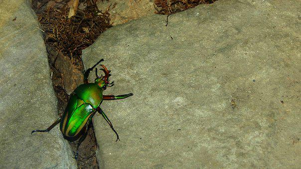 Beetle, Insect, Nature, Beauty, Brouček