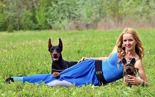 Dogs, Doberman, Yorkie, Naturally, Field, Blonde Woman