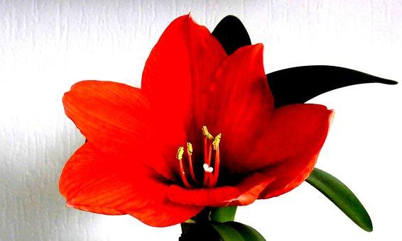 Flower, Bromeliad, Blossom, Bloom, Plant, Nature