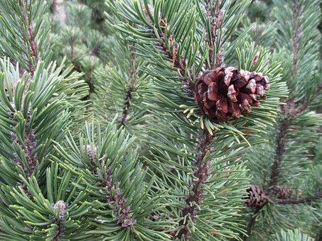 Christmas Background, Advent Wreath, Advent Calendar