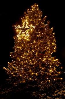 Christmas, Lights, Christmas Tree, Christmas Dream