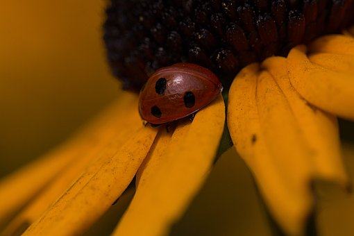 Ladybug, Flower, Nature, Bug, Insect, Flora, Colorful