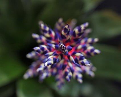 Flower, Plant, Bromeliad, Colors, Aechmea, Blue Tango