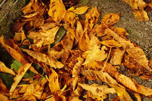 Leaves, Fall Foliage, Colorful Leaves, Fall Color, Dry