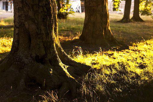 Tree, Tree Root, Nature, Forest, Wood, Root, Back Light