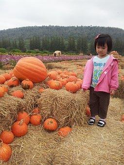 Kids, Pumpkin, Smile, Girl, Autumn, Thailand