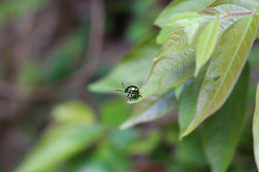 Bug, Leaf, Nature, Green, Insect, Garden, Pest, Plant