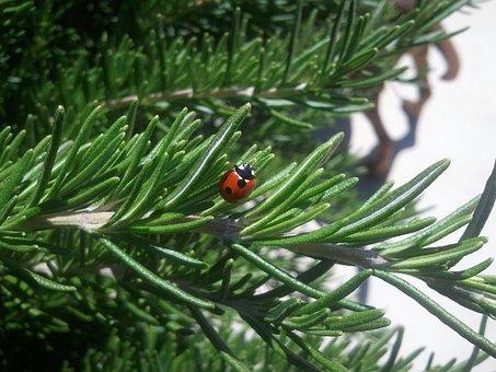 Ladybug, Insect, Nature, Lady-beetle, Bug, Plant, Life