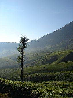 Munnar, India, Tea, Asia, Landscape, Kerala, Hill, Lush