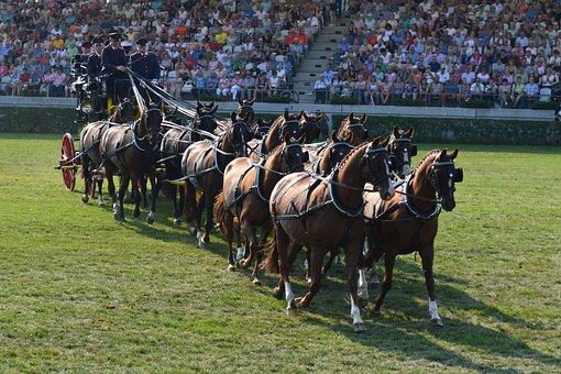 Mares, Coach, Carriage, Stallion Parade, Neustadt Dosse