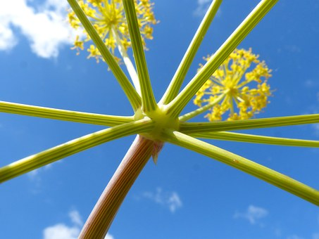 Plant Forms, Geometry, Naturally