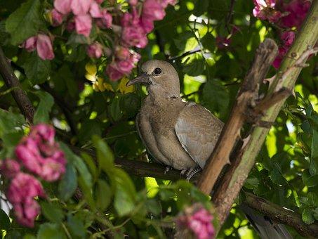 Dove, Flower, Pink, Rosebush, Young, Garden, Bird, Park
