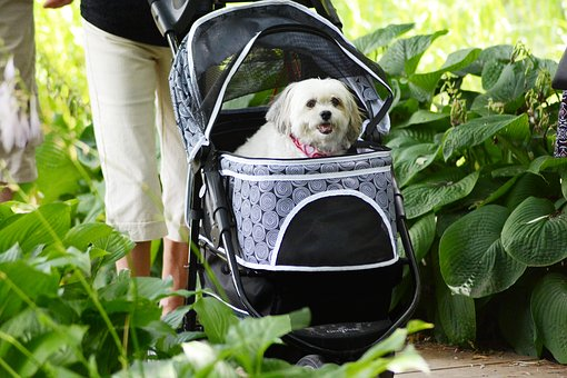Pooch Carriage, Dog, Domestic, Green, Pet, Spotted