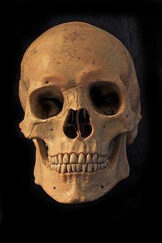 Skull And Crossbones, Skeleton, Skull, Bone, Skull Bone