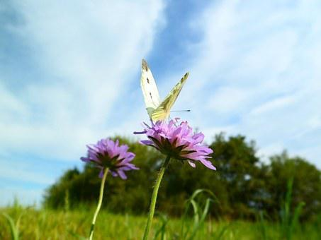 Butterfly, Insect, Close, Animal, Wing, Flight, Summer