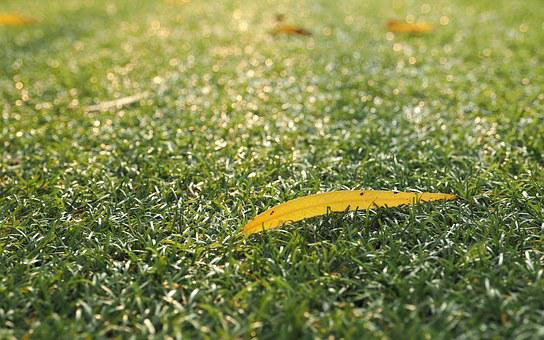 Grass, The Lawn, The Leaves On The Lawn, Autumn Leaves
