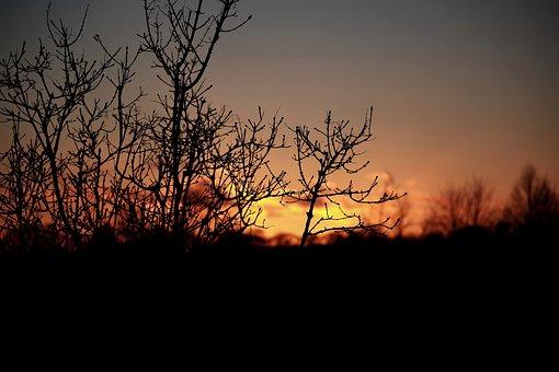 Sunset, Twilight, Evening, Sky, The Sun, Tree