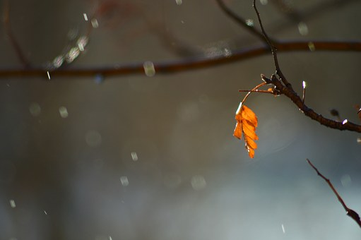 Tree, Sheet, Spring, Warm, City, Drops, Rain, Orange