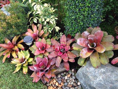 Bromeliads, Garden, Rock Garden, Tropical Garden