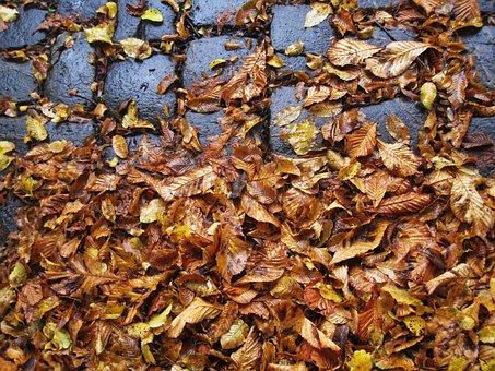 Cobbled, Leaves, Slippery, Autumn, Wet, Wet Leaves