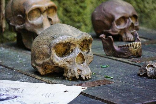 Ape, Skull, Skeleton, Wood, Bone, Skull Bone, Dead