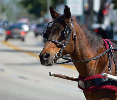 Carriage Horse, Work Horse, Horse, Animal, Mammal