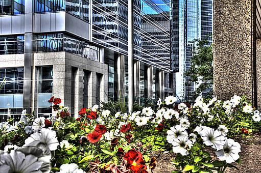 Calgary, City, Canada, Flowers, Alberta, Downtown
