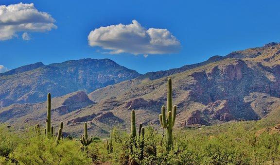 Tuscon, Arizona, Desert, Beautiful, Scenery, Cactus