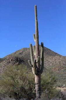 Cactus, Tuscon, Arizona, Southwest, Desert