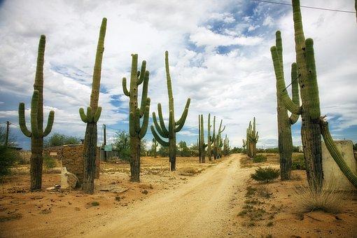 Desert, Catus, Cacti, Dirt Road, Arizona, Landscape