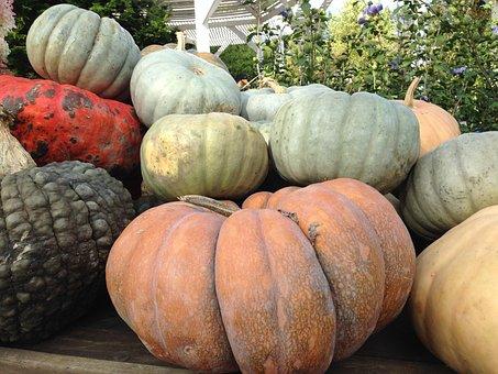 Pumpkin, Autumn, Fall, November, October, Pumpkins