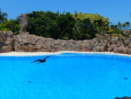 Bird, Pool, Sea Basin, Water, Blue, Lagoon, Artificial