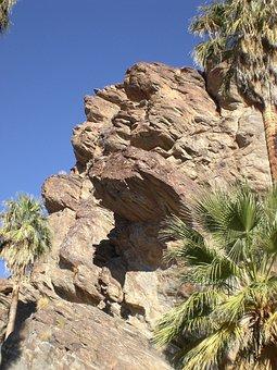 Palm Cayon, California, Nature, Palm Trees, Desert