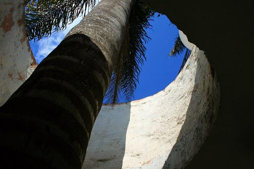 Palm Tree, Tree, Tall, Palm, Roof, Opening, Sky