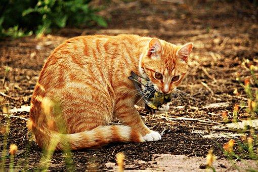 Cat, Kitten, Bird, Prey, Red Mackerel Tabby, Red Cat