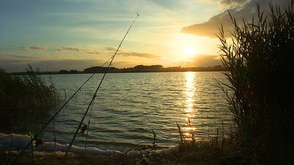 Fish, Evening, Sunset, Lakeside, Fishing Rods, Fishing