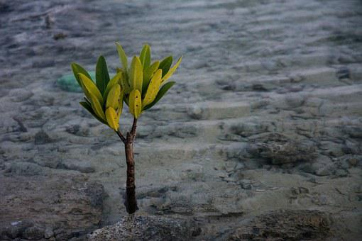 Water Plant, Sproutling, Plant, Ocean, Sea, Beach