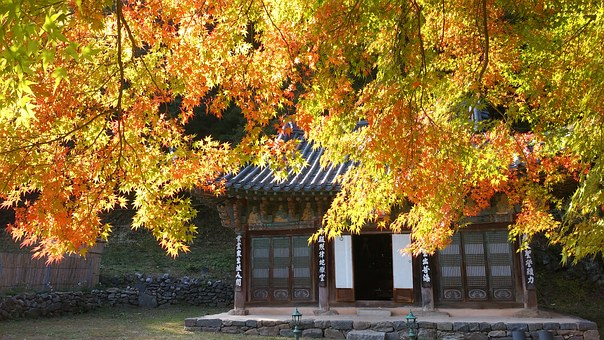 Autumn, Magoksa, Nature, Traditional Architecture