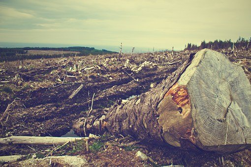 Deforestation, Forest, Wood, Cut, Environment, Ecology
